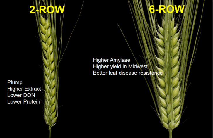 Familiar terms-2 Row and 6 Row Barley